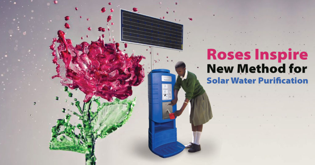 Roses Inspire New Method for Solar Water Purification