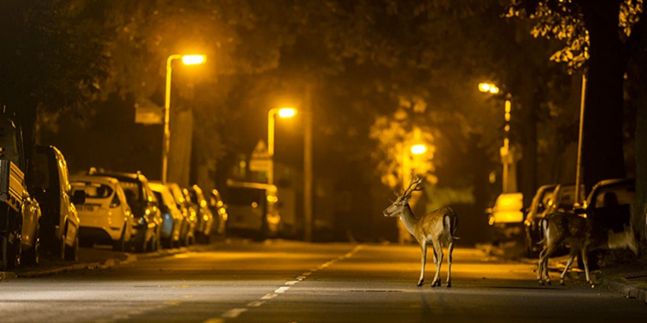 Outdoor Street Lighting to Protect Wildlife and the Environment